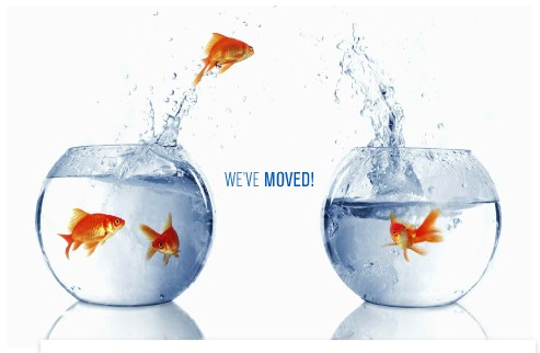 we've moved - fish jumping